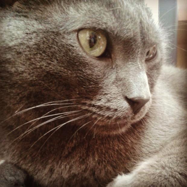 Simon (5)